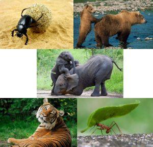 Dünyanın En Güçlü Hayvanı
